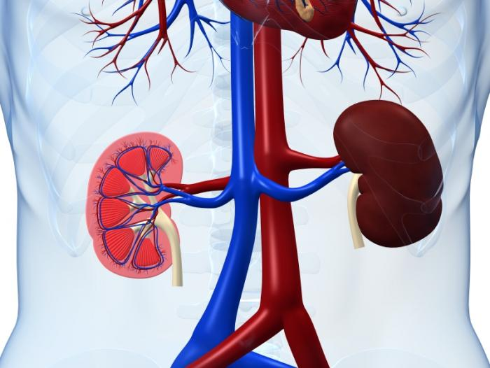 Take Care of Damaged Kidneys